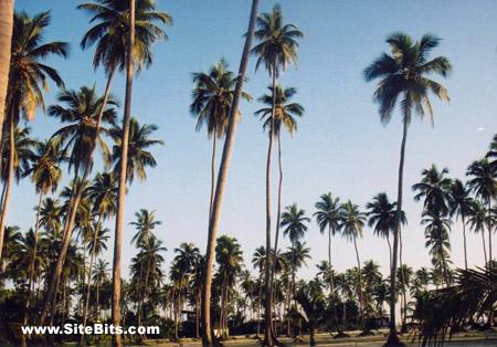 Bavaro Beach Sunny