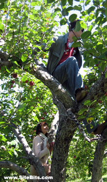 Apple Picking: The Tree