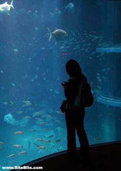 Kaiyukan Aquarium: Fishies