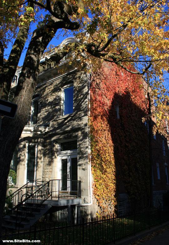 Fall in McGill Ghetto
