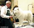 Westminster Dog Show: Fluffed for Judging