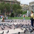Feeding Pigeons in Plaça de Catalunya(thumb)