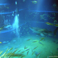 Kaiyukan Aquarium(thumb)