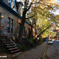 The colors of Fall in the McGill Ghetto(thumb)